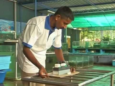 Aquatic Nurseries - From The Deep Blue Waters Of Sri Lanka video