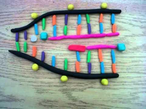 Dna Replication 3d DNA Replication projec...