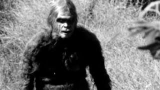 14 AMAZING THINGS ABOUT BIGFOOT
