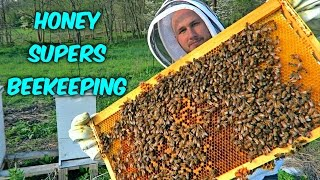 Adding First Honey Supers