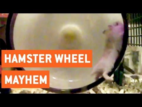 ハムスターが回し車から吹っ飛ぶ瞬間をスローモーションで激写!