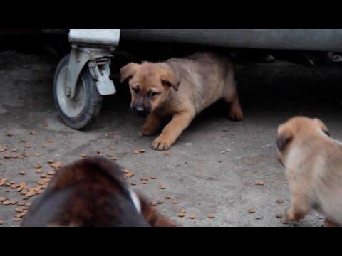Сохраним жизнь  бездомным животным вместе ...