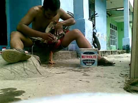 mandiin ayam