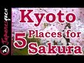 Lagu Top 5 Places to See Sakura (Cherry Blossoms) in Kyoto!