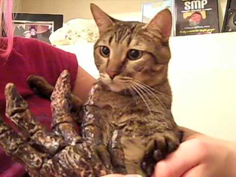 Kitties HATE Mermaids! Video