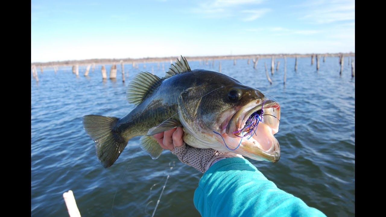 Top 5 Baits for Early Spring Bass Fishing - YouTube