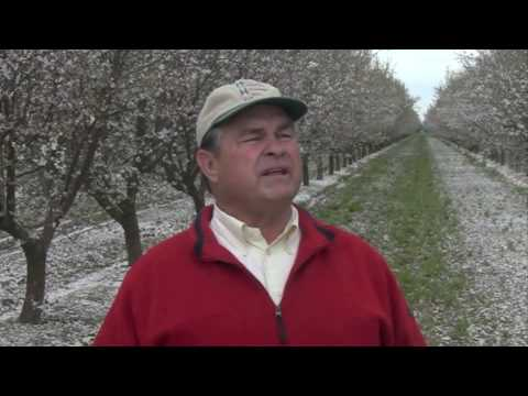 Meet the Men Who Grow Your Almonds Part 1
