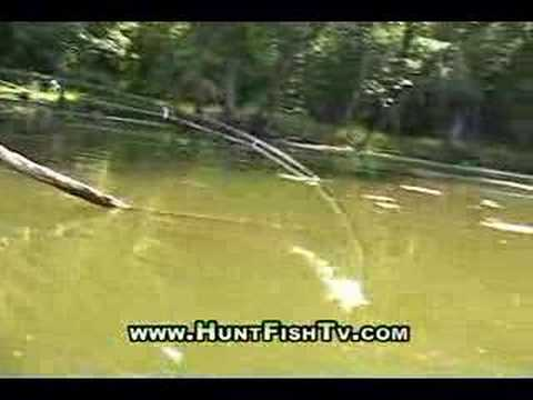 Fishing Mississippi River Backwater Bass Fishing Video