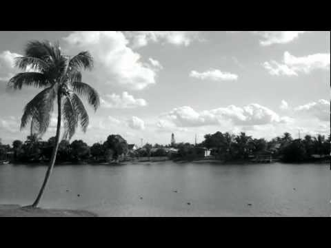 Pleasant looking Black & White video of a Palm tree and birds on a lake