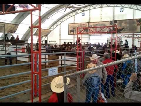 mart calgary auction report stockyards