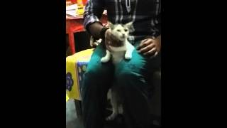 download lagu S Cat Is Tortured gratis