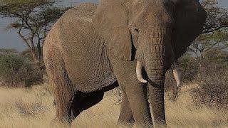 Documentary Animal World Nature Film