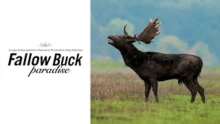 Fallow Buck Paradise - Hunters Video