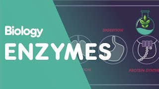 Enzymes | Biology for All | FuseSchool