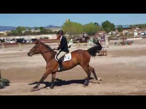 Rio De Janeiro - Quidam De Revel - 1.40m - Rancho Corazon - BDN Horses