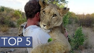 Download Top 5 Unlikely Animal Friendships 3Gp Mp4