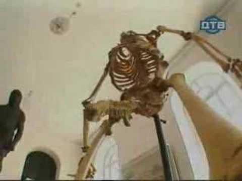 Pegadinha do Esqueleto Excitado