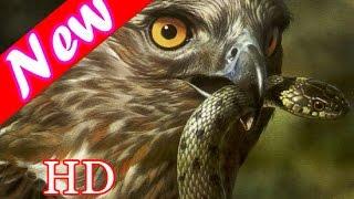 The gioi dong vat - Các loài chim rừng nhiệt đới - Thuyết minh
