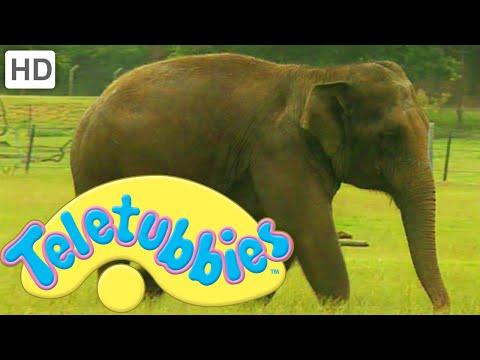 Teletubbies: Washing The Elephant - Hd Video video