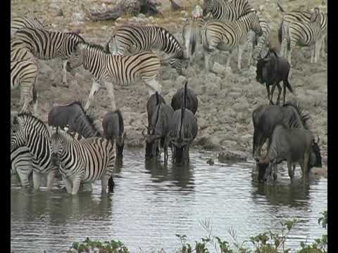 Namibia Wildlife 2 HQ