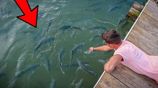 HAND FEEDING MONSTER SALTWATER FISH!!!