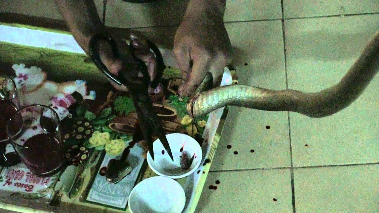 Смотреть ролики про въетнамок 18 фотография