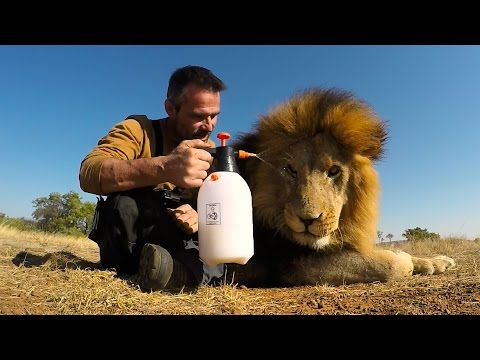 Lion Treats!!! The Everything Spray | The Lion Whisperer