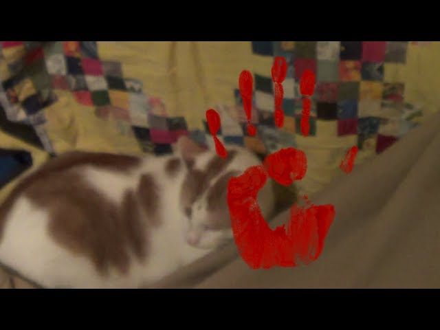 Scary cat attacks me under the blanket!