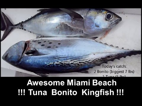 Fishing Adventures #73 - Miami Beach Trolling for Bonito Kingfish and Blackfin Tuna