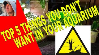 TOP 5 THINGS YOU DON'T WANT IN YOUR AQUARIUM