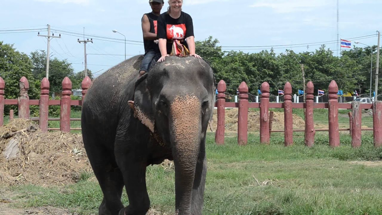 the elephantstay program in Thailand - YouTube