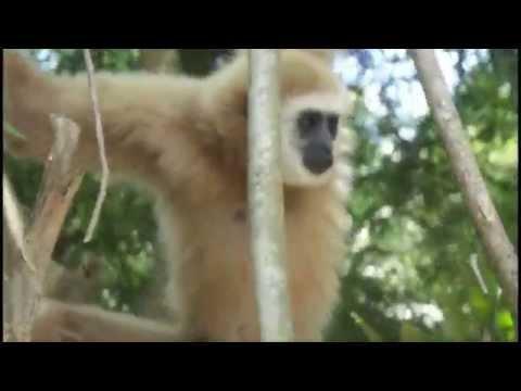 Прикольные Обезьянки / Funny Monkey