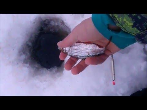 |EbiFishingTV|  Wędkarstwo Podlodowe. Płotki Na Spławik. Ice Fishing 2016!