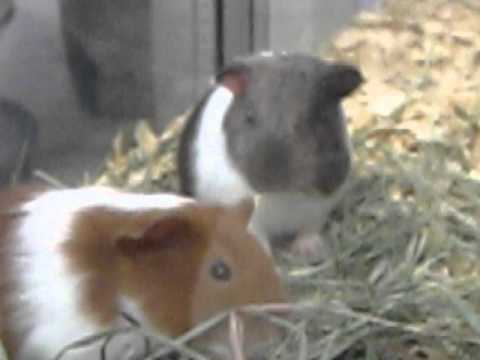 Small Animals At Pets-r-us