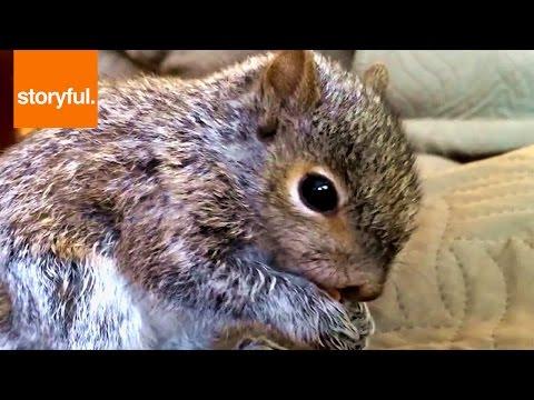 Squirrel Stress Eats Cheerios During NBA Draft (Storyful, Wild Animals)