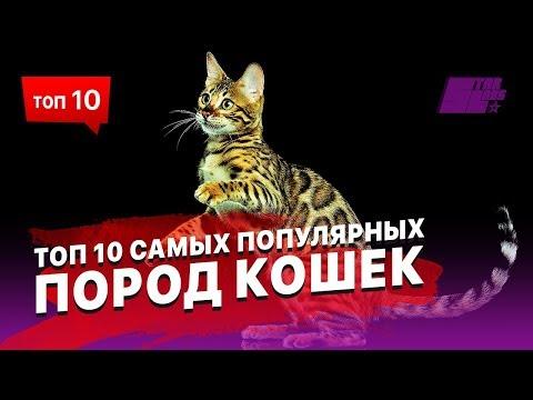ТОП 10 самых популярных пород кошек. Выбираем себе питомца!