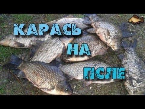 ловля карася в полтавской области
