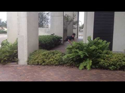 Crusty Downtown Tampa Spots With Quinton