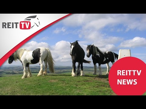 REITTV-News: Rasseportrait Irish Cob/ Dressurtipps/ Munich Indoors