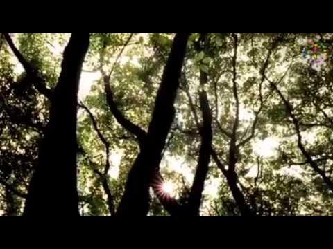 Ersen Dadaşlar ♫ ♥ ♪ ☆ Gülü Seven Diken