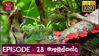 Sobadhara - Sri Lanka Wildlife Documentary | 2019-10-04 |Maibul Kanda