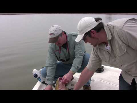 Catfish Fishing - Secrets, Tricks, and Tips to Catching Big Catfish - Part 2! Video