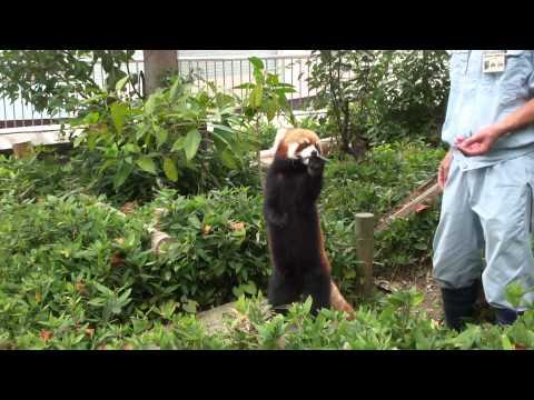福岡動物園 アライグマ 画質良好