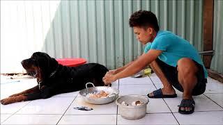 Chó Rottweiler  11 tháng Tuổi -  lu lu bữa ăn 20 trứng vịt