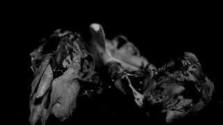 CLOAK - The Hunger