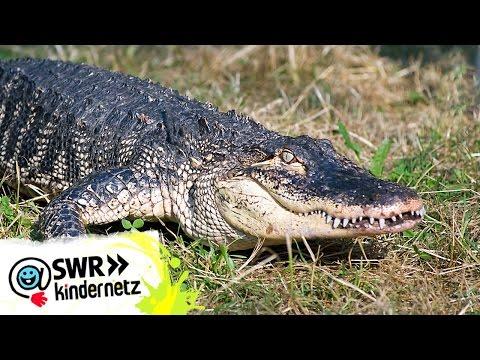 Tabeas Lieblingsfolge | Tiere bis unters Dach | SWR Kindernetz