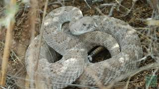 Snake Safety - Tips from a Wildlife Biologist