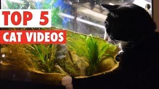 ちょっと変わったアメージングな猫たち5選♪