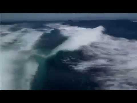 Касатки нападают на людей. Orca atack