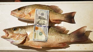 Catch And Cook: Mangrove Snapper Pandemic Supply Recipe